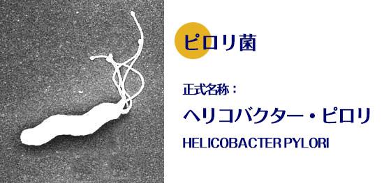 ピロリ ヘリコバクター
